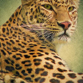 Angela Doelling AD DESIGN Photo and PhotoArt - Leopard