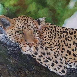 Leopard in Wonder by Maria Ferreira