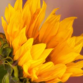 Joan Bertucci - Let the Sun Shine