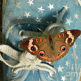 Let Your Spirit Fly Free- Butterfly Nature Art by Robyn King