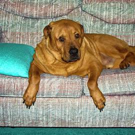 Lexus on Sofa by Sally Weigand