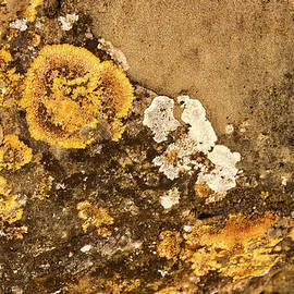 Stuart Litoff - Lichen on the Piran Walls