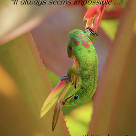 Life Lessons From A Gecko #1 by Susan Rissi Tregoning