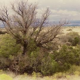 Life of a High Desert Juniper Pinyon by Flying Z Photography by Zayne Diamond