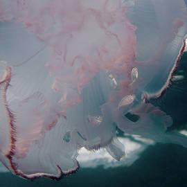 Life Under a Jellyfish