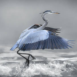 Lifting Off - Selective Color by Donna Kennedy