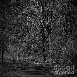 Light and Wood Monochrome by Frank J Casella