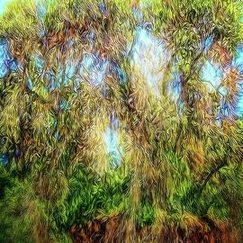 Joel Bruce Wallach - Light Beyond The Woods