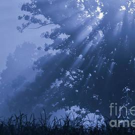 Light in Blue by Rachel Cohen