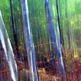 Bill Morgenstern - Light in the Forest