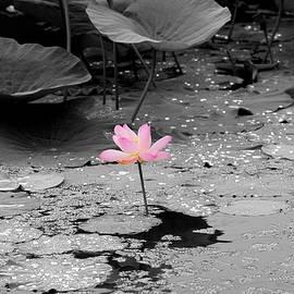 Igor Malinovskii - Light of the Lotus, 1, Black and White