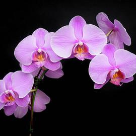 Denise Bird - Light on the Purple Please