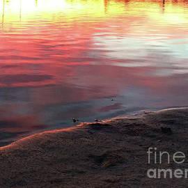 Clay Cofer - Light on the Shoreline