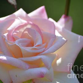 Ruth Housley - Light Pink Rose 2