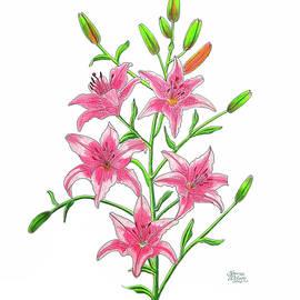 Laura Wilson - Light Pink Tiger Lily