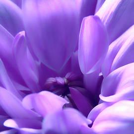 Light Purple Beauty by Johanna Hurmerinta