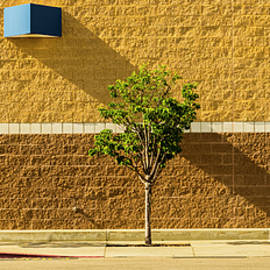 Light Shade by Steven Milner