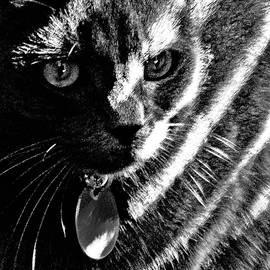 Light-Striped Kitty by Claudia O'Brien