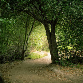 Light Through The Tree Tunnel by Alison Frank