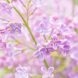 Lilac Flowers Mist by Alexander Senin