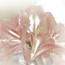 Karry Degruise - Lilies