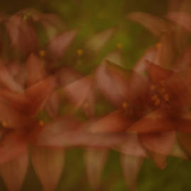 Lily Double Exposure by Sherri Meyer