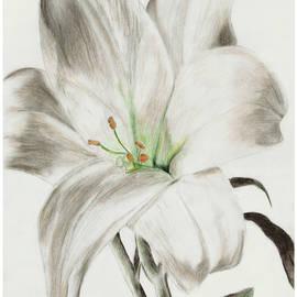 Chana Voola - Lily flower