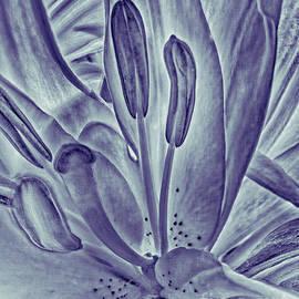 Jeff Breiman - Lily In Purple