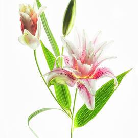 Usha Peddamatham - Lily is my name.