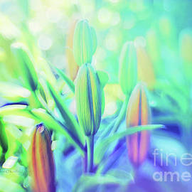 Lily Light by Jean OKeeffe Macro Abundance Art