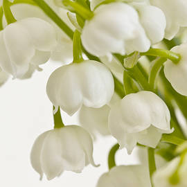 Lily Of The Valley by Sandra Foster