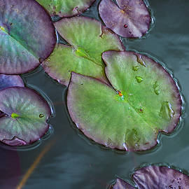 Lily Pads by Rick Mosher