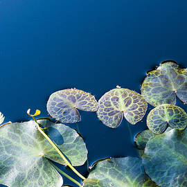 Lilypads by Steven Ralser