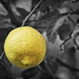 Limone In Selective Color by Toni Abdnour