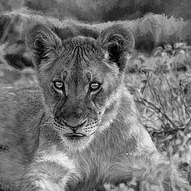 Kay Brewer - Lion Cub in Black and White