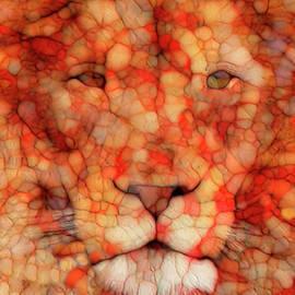 Jack Zulli - Lion