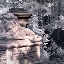 Helga Novelli - Lion sleeping in the shade