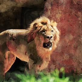 Lion by T A Davies