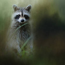 Jai Johnson - Little Bandit