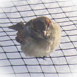 Donna Munro - Little Bird Brown Ear Band