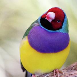 Michael Hills - Little Bird