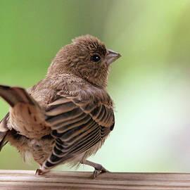 Trina Ansel - Little Bird