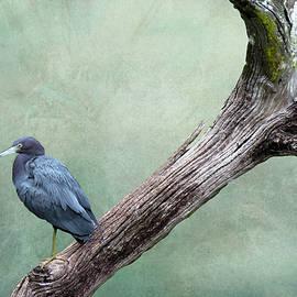 Rosalie Scanlon - Little Blue Heron on Green