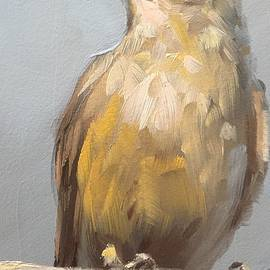 Gary Bruton - Little Brown Bird