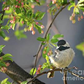 Nava Thompson - Little Chickadee In the Pink