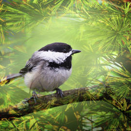 Little Chickadee by Reese Lewis