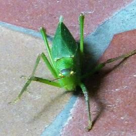Denise Fulmer - Little Grasshopper