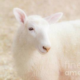 Little Lamb by Eleanor Abramson