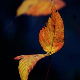 Little Leaves by Toni Hopper