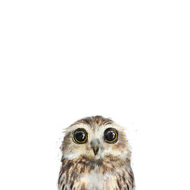 Little Owl by Amy Hamilton